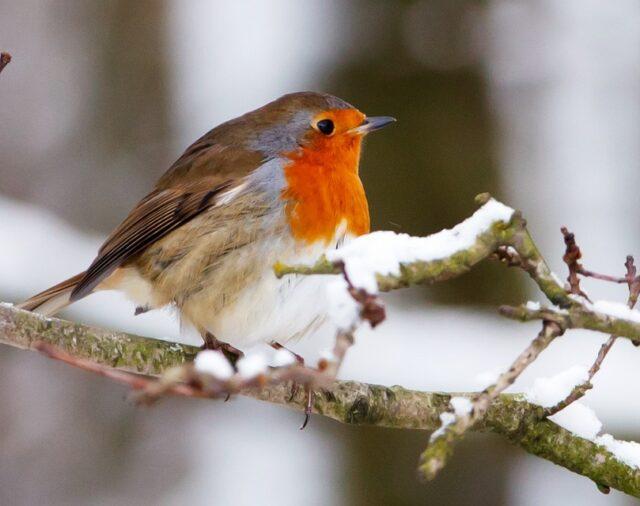 Акція «Нагодуй птахів узимку»
